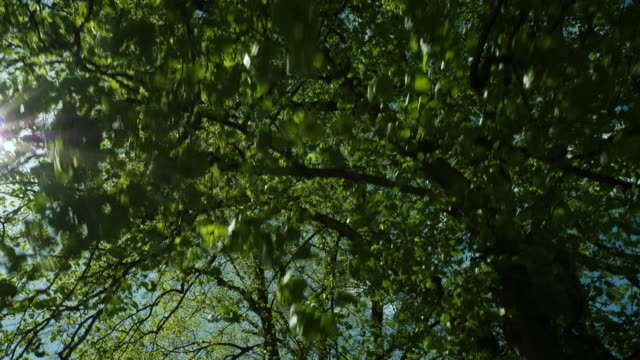 low angle tracking shot moving underneath trees. - cambridge england stock videos and b-roll footage