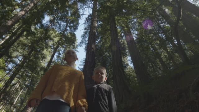 low angle tracking shot of boy and girl walking in forest looking up at trees / muir woods, california, united states - tracking shot stock videos & royalty-free footage
