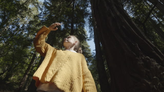 low angle tracking shot of girl photographing trees with cell phone walking in forest / muir woods, california, united states - filming stock videos & royalty-free footage