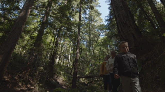low angle tracking shot of mother and children walking on path in forest / muir woods, california, united states - 子供4人の家庭点の映像素材/bロール