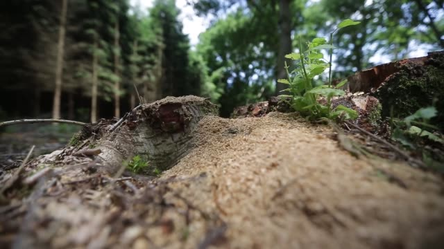 stockvideo's en b-roll-footage met low angle tracking view across undergrowth in woodland in an area set to be explored for shale gas by celtique energie ltd in fernhurst west sussex... - schalie