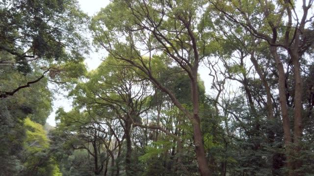 vídeos de stock, filmes e b-roll de floresta de visualização de baixo ângulo 4k - estampa de folha