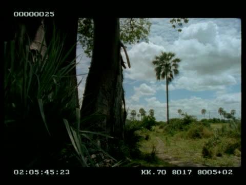 vidéos et rushes de low angle view from woodland edge, out to grassland. prehistoric look - angle de prise de vue