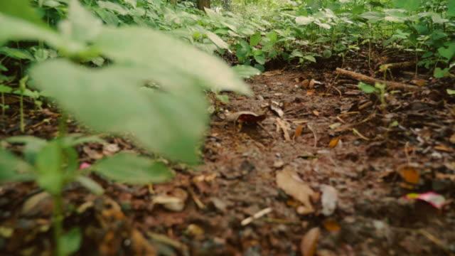 vídeos de stock, filmes e b-roll de baixa visão de ângulo: movendo-se através da floresta de primavera - ponto de vista de câmera