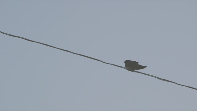 Low angle view of a bird perching on a cable flying away
