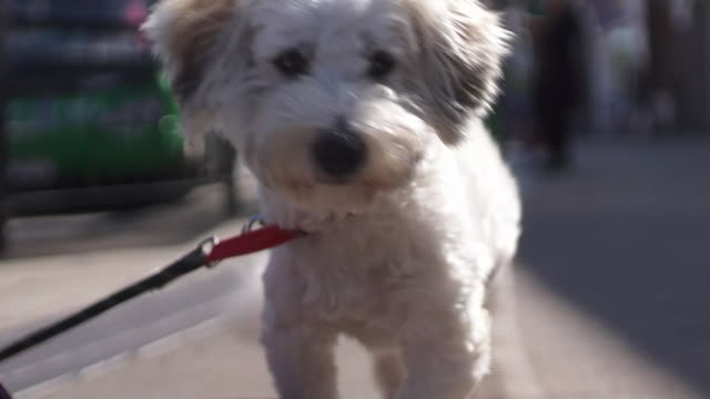 low angle view of a dog in the street - cute stock videos & royalty-free footage
