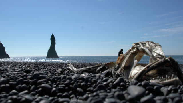 Low angle view of a skeleton of a fish on Reynisfjara Black Beach on the South Coast of Iceland