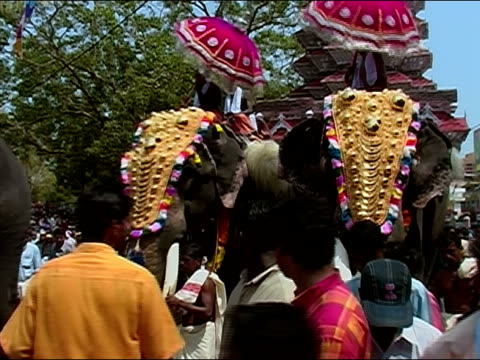 vídeos de stock, filmes e b-roll de low angle view of adorned elephants being led through the street during the thrissur pooram elephant festival / thrissur, kerala, india - animal de trabalho