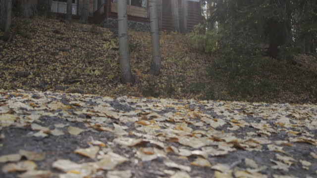 low angle view of aspen leaves on the ground in the grand mesa national forest near grand junction colorado in the beautiful september fall colors - covering stock videos & royalty-free footage