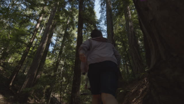 low angle view of boy photographing trees with cell phone in forest / muir woods, california, united states - 国有林点の映像素材/bロール