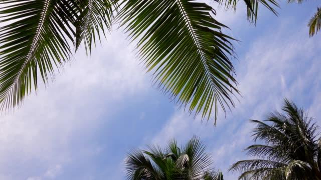 vidéos et rushes de vue d'angle bas des arbres de cocotier sur le fond bleu de ciel de plage - feuille de palmier