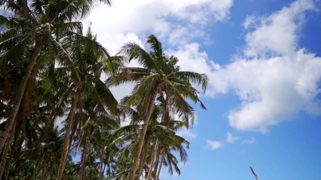 low angle view of coconut palm trees on the beach - palm leaf stock videos & royalty-free footage