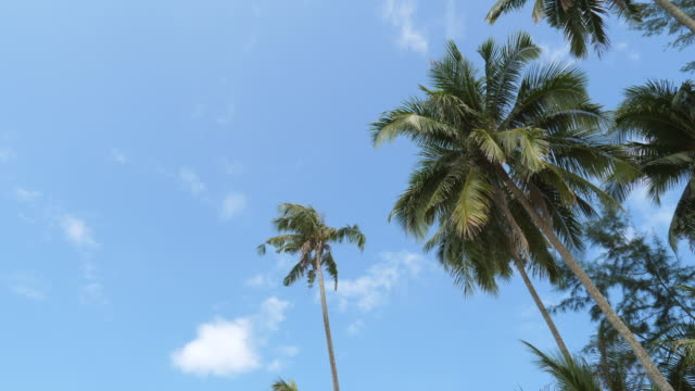 low angle view of coconut tree against blue sky along the beach - palmenblätter stock-videos und b-roll-filmmaterial