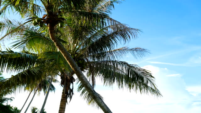 low angle view of coconut tree against blue sky along the beach - ondeggiare video stock e b–roll
