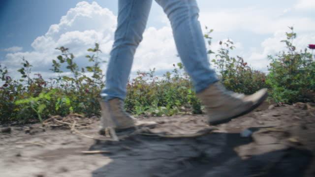 農家の女性の足の低角ビューは、バラのプランテーションで新しい苗を歩いて調べています。農業職業。家業。 - 農学者点の映像素材/bロール