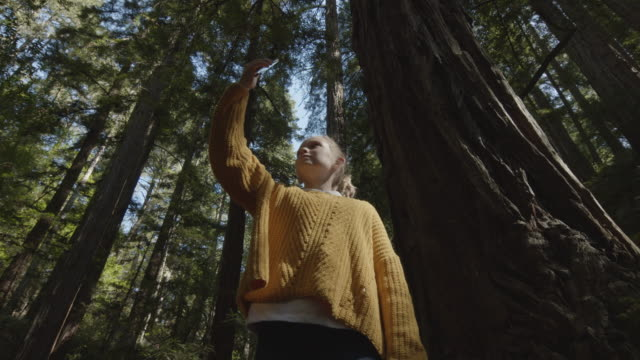 vídeos de stock e filmes b-roll de low angle view of girl photographing trees with cell phone standing in forest / muir woods, california, united states - com sombra