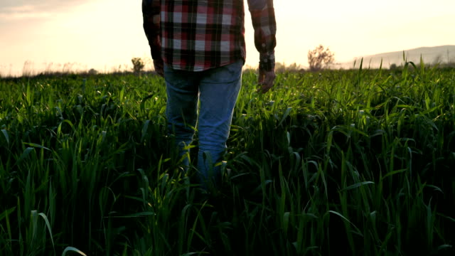 low angle view of men walking on a grass field - open field stock videos & royalty-free footage