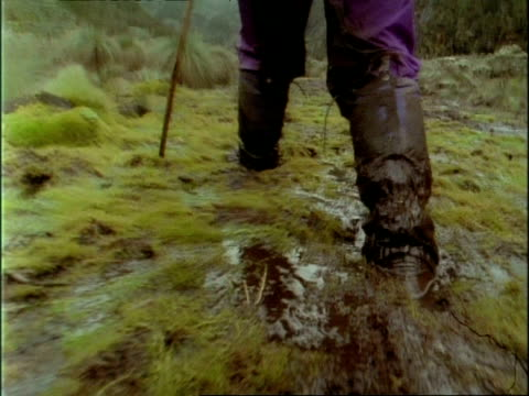 ms low angle view of muddy booted legs wading through marsh, rwenzori mountains, uganda - wet stock videos & royalty-free footage