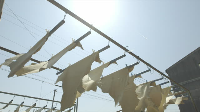 low angle view of numerous pieces of tanned white deerskin leather hanging on the line swaying in the wind outside of the tannery - animal skin stock videos & royalty-free footage