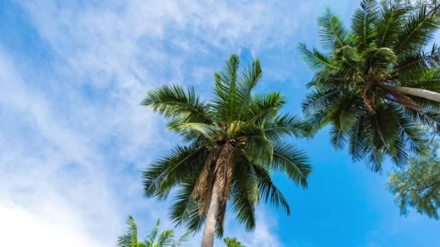 low angle view of palm tree against blue sky, time lapse video - foglia di palma video stock e b–roll