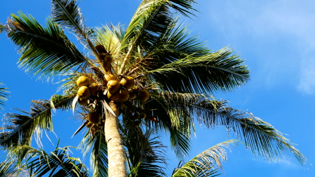 low angle view of palm tree against blue sky - ondeggiare video stock e b–roll