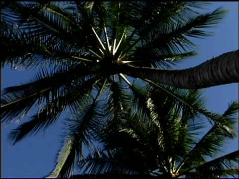 low angle view of palm tree - blattfiedern stock-videos und b-roll-filmmaterial