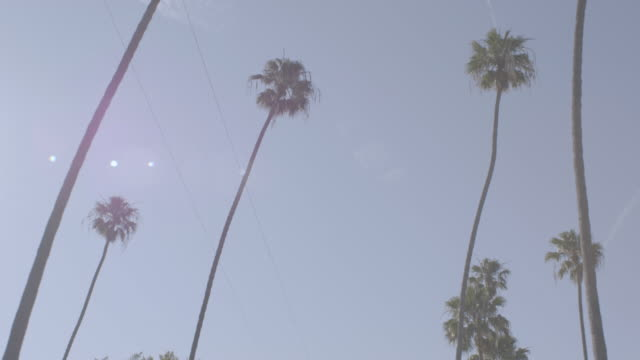 ws pov low angle view of palm trees against blue sky / venice, california, united states - power cable stock videos & royalty-free footage