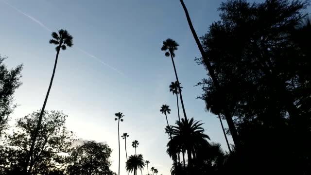 niedrigen winkel blick auf palmen auf den straßen von la - von bäumen gesäumt stock-videos und b-roll-filmmaterial