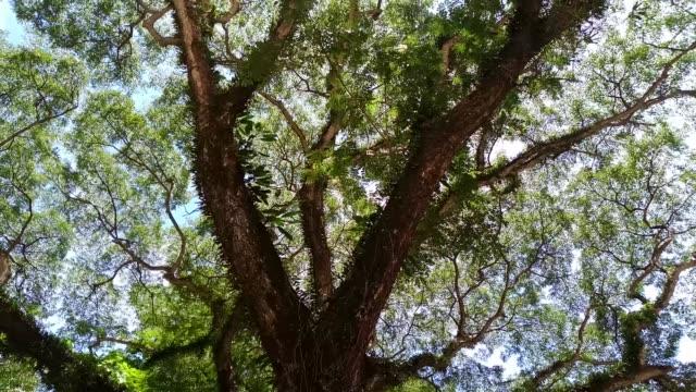 雨の樹の低角度のビュー - low angle view点の映像素材/bロール