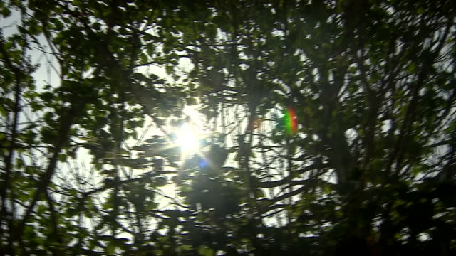 low angle view of sunlight breaking through trees - emergence stock videos & royalty-free footage