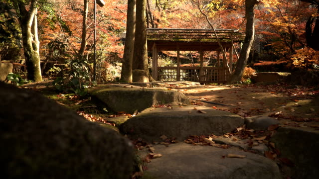 low angle view of wooden pavilion with red maple Plants in Japanese Garden