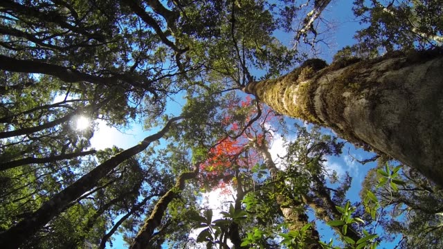 low angle view rain forest with blue sky and sunbeam - deciduous tree stock videos & royalty-free footage