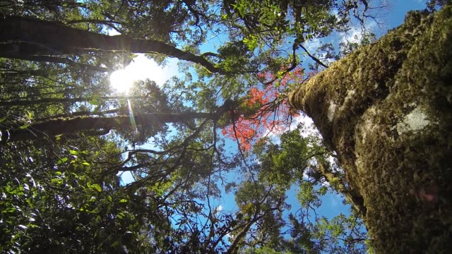 low angle view rain forest with blue sky and sunbeam - treetop stock videos & royalty-free footage
