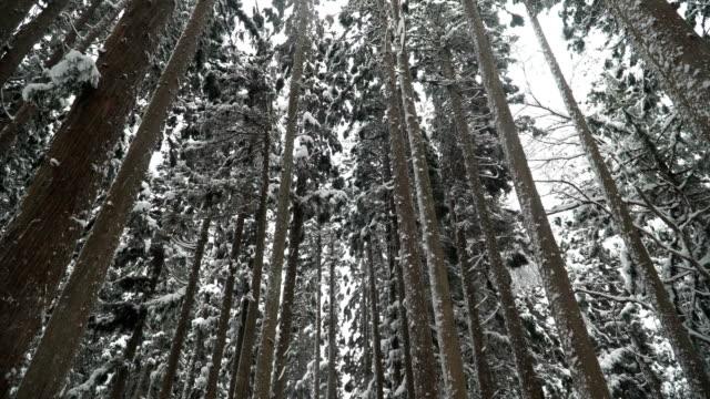 低角度表示: 白川郷村で雪に覆われた鬱蒼とした森の梢 - wood material点の映像素材/bロール