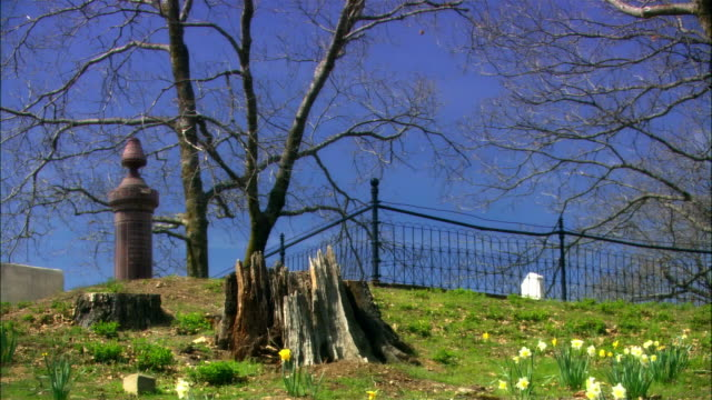 stockvideo's en b-roll-footage met low angle view up a hillside, flowers in foreground, tree stump in middle, headstone, fence, and bare tree in background at crest - bare tree