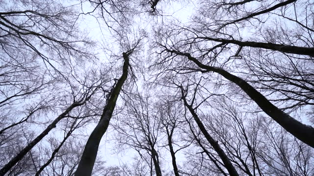 low angle view winter trees - bare tree stock videos & royalty-free footage