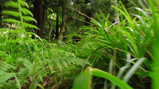 stockvideo's en b-roll-footage met lage hoek die door bos klein dier pov loopt - low angle view
