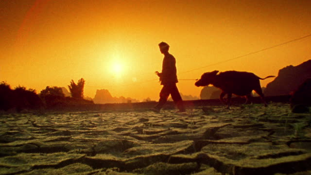 low angle wide shot man guiding water buffalo across cracked earth with orange sun in background / yang-shu, china - silhouette stock videos & royalty-free footage