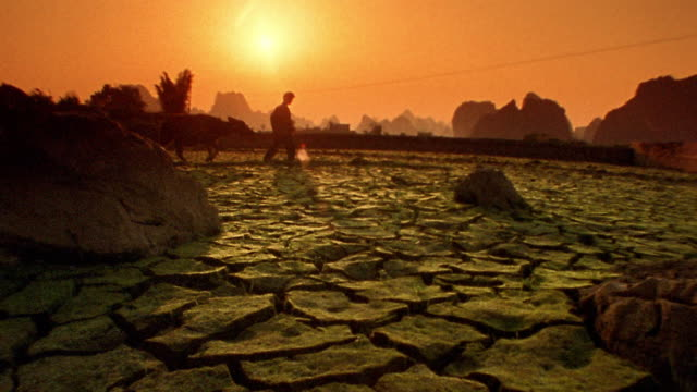 low angle wide shot man walking with water buffalo over cracked earth with orange sun in background / yang-shu, china - herbivorous stock videos & royalty-free footage
