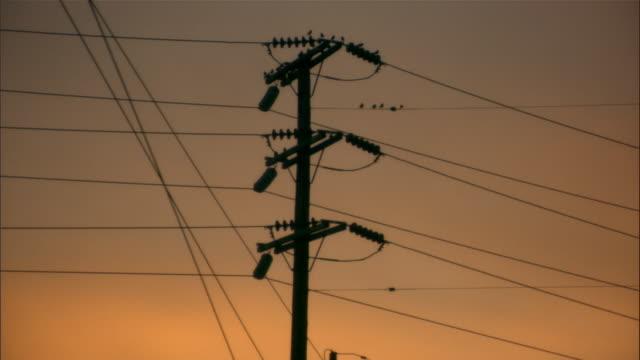 vídeos y material grabado en eventos de stock de low angle wide shot silhouette of birds sitting on telephone wires at dusk/ los angeles, california - poste telegráfico