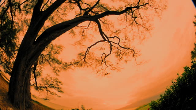 low angle wide shot time lapse clouds with silhouette of tree in foreground / sunset to night / maui, hawaii - sunset to night stock videos & royalty-free footage