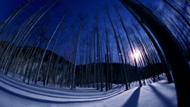 Low angle wide shot time lapse moon rising behind forest in winter / Aspen, Colorado
