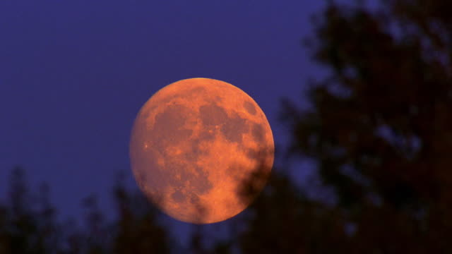 vidéos et rushes de low angle wide shot time lapse moon rising with silhouetted branches in foreground / wyoming - au loin