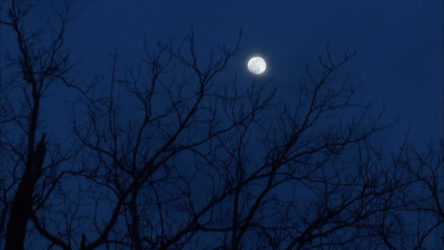 stockvideo's en b-roll-footage met low angle wide shot view of full moon in sky through bare tree branches / night - bare tree