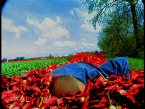 low angle wide shot young man running and jumping into pile of tulips + smiling / lausanne, switzerland - only mid adult men stock videos & royalty-free footage