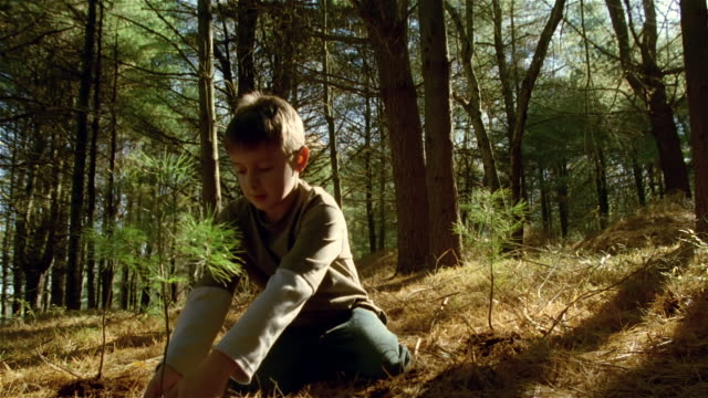vidéos et rushes de low angle young boy on his knees planting trees - zone arborée