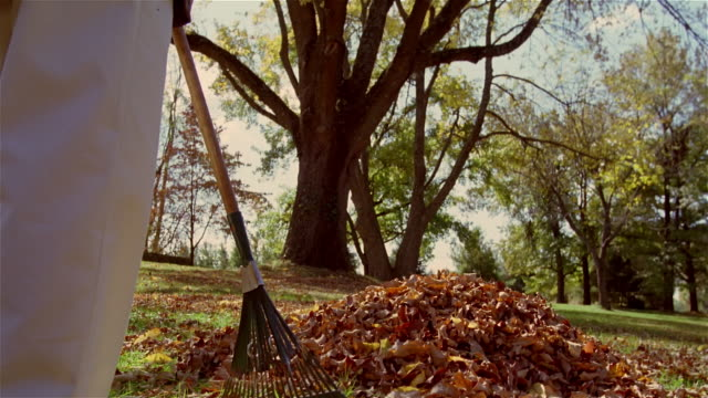 vidéos et rushes de low angle young boy popping out of pile of autumn leaves / man standing by with rake - cache