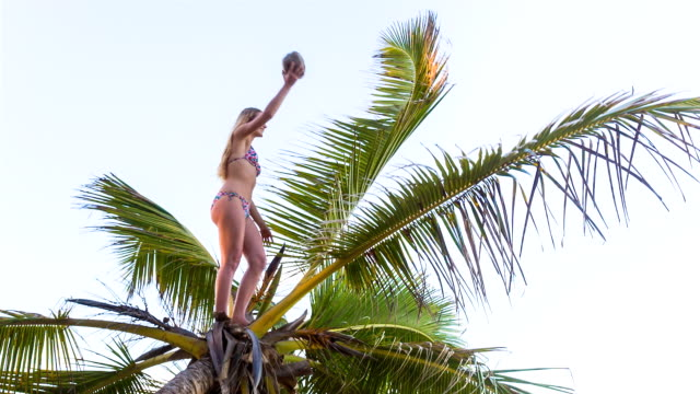 ws low angle, young woman climbing palm tree to pick fresh coconut - coconut palm tree stock videos & royalty-free footage