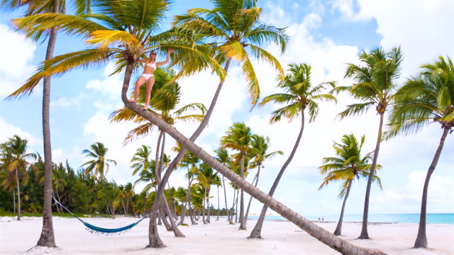 WS Low angle, young woman climbing palm tree