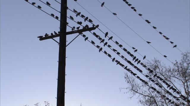 low angle zoom-out - hundreds of birds perch on telephone wires, then scatter. / los angeles, california, usa - telefonledning bildbanksvideor och videomaterial från bakom kulisserna